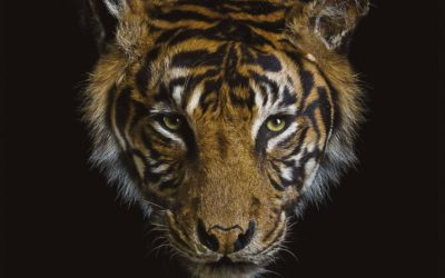 Animals – Une expo photographique surprenante